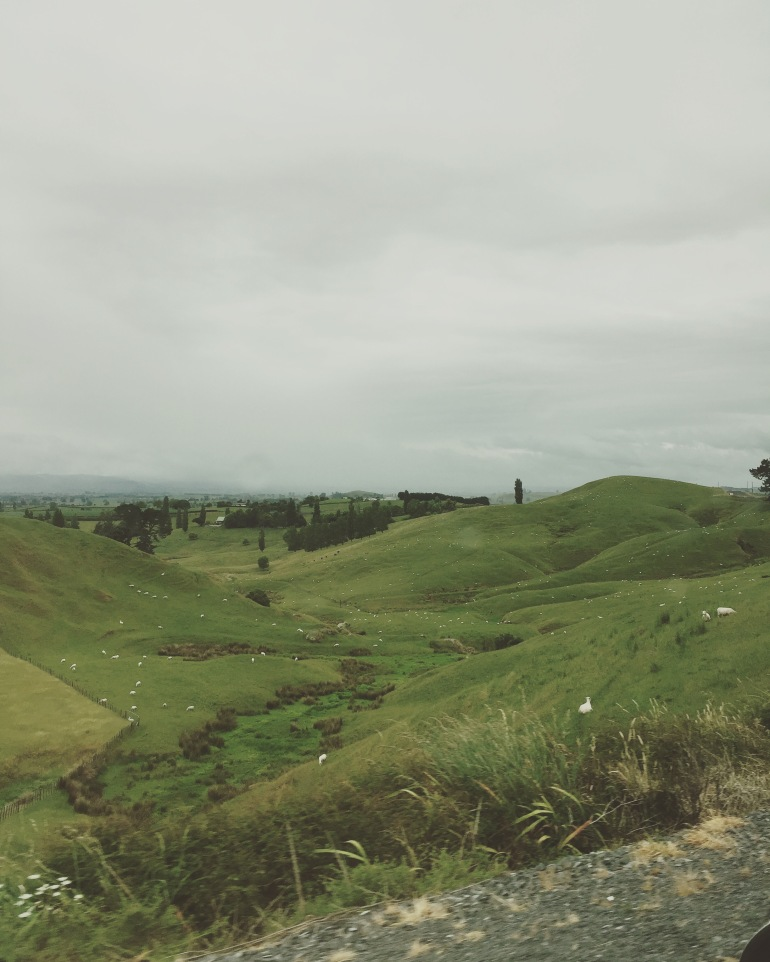 shire views of matamata
